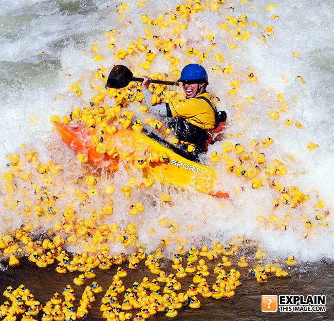 - The newest olypic event: Kayakers with Quackers