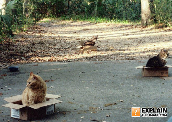 - Cat Outposts.