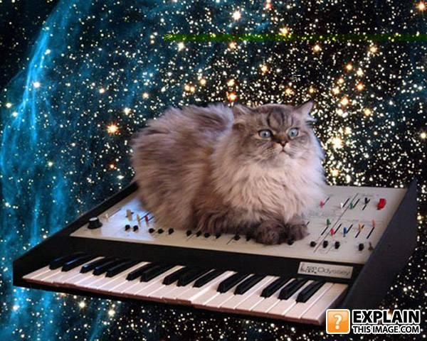 - pace cat mixin high