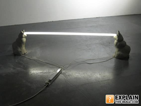 - Cats have the POWER!